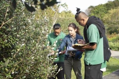 Botanical-Gardens-Mytle-Rust-Survey_PFR4379__ScaleMaxWidthWzY0MF0