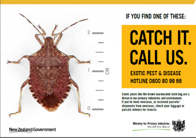 Stink Bug article-1_html_30bcec52